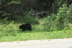 der erste von mir gesichtete Bär :-)